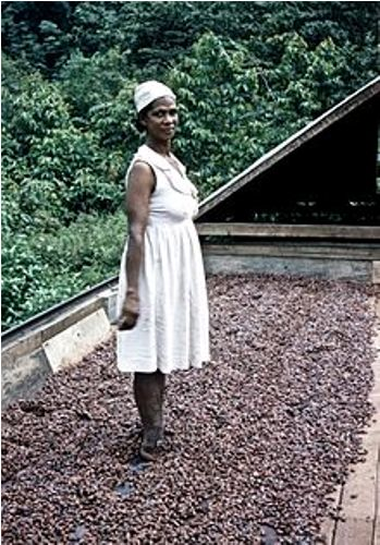 Cocoa Grower