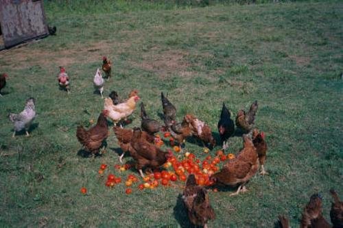 Facts about Farm Animals