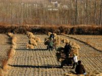 10 Facts about Farming in China