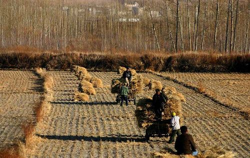 Facts about Farming in China