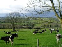 10 Facts about Farming in Ireland
