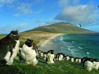 10 Interesting Facts about Falkland Islands