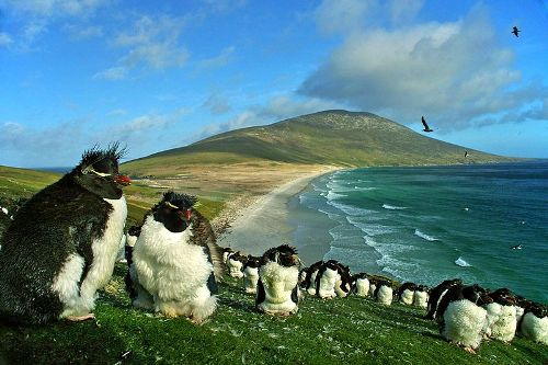 Falkland Islands and Beaches