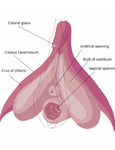 FGM Image