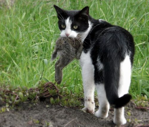 Facts about Feral Cats