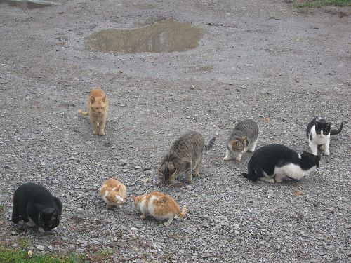 Feral Cats Facts