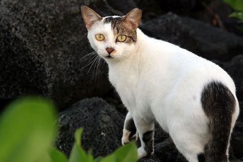 Feral Cats Pic