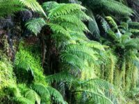 10 Facts about Ferns