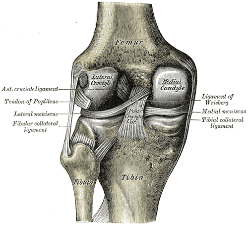 the Femur Image