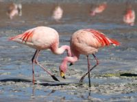 10 Fun Facts about Flamingos