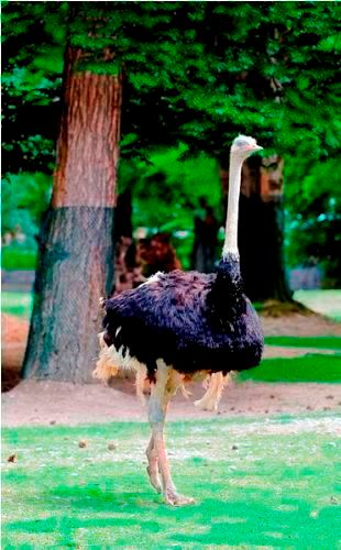 Facts about Flightless Birds